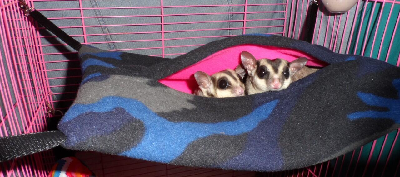 Brigde, hammock, hiding and sleeping pouch sugar glider