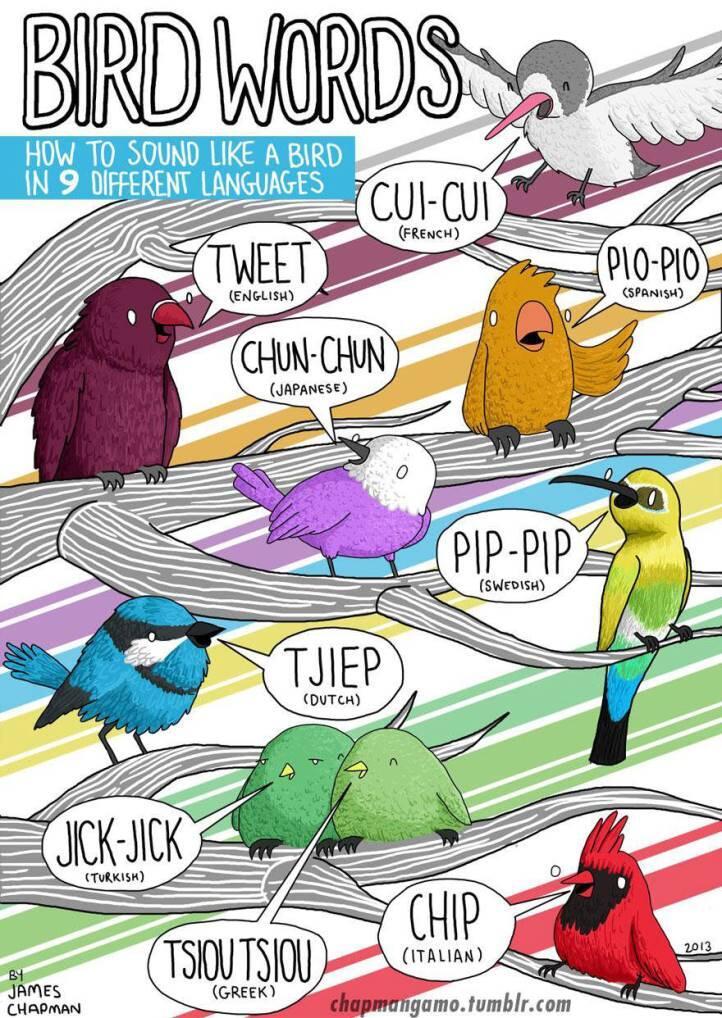 ~๑๑.Ilustrasi Suara Hewan dalam Berbagai Bahasa.๑๑~[CEKIDUT]
