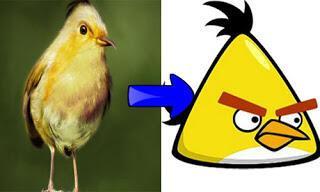 6 jenis burung angry bird yang asli keberadaannya