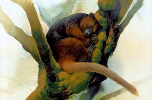 Ada yang tau kanguru pohon? Ya itu ada!! di INDONESIA. yaitu, di PAPUA