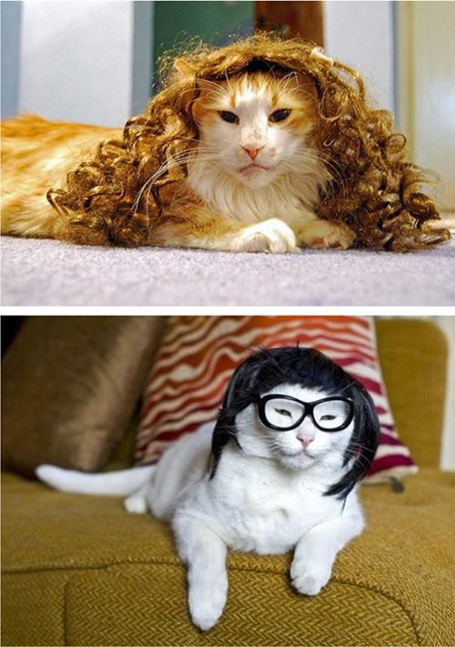 Begini Jadinya kalo Kucing Pake Wig :ngakak