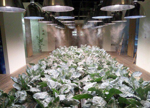Pasona, Gedung Perkantoran Modern Sekaligus Lahan Pertanian di Jepang