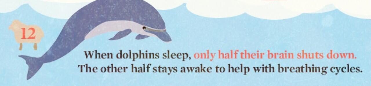16 Hal Tentang Tidur (yang mungkin belum pernah anda ketahui)
