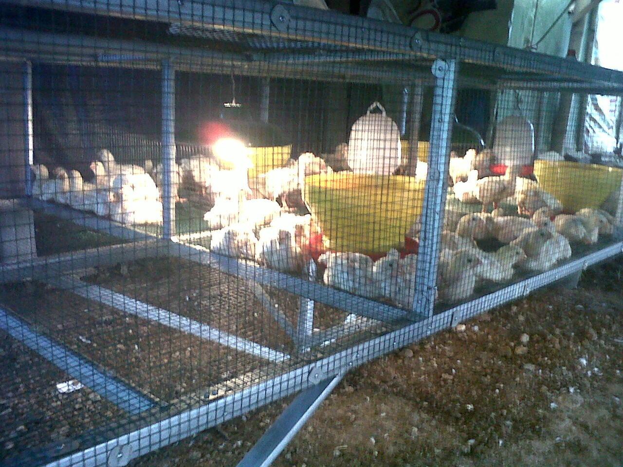Ukuran Kandang Ayam Untuk 100 Ekor - Berbagai Ukuran