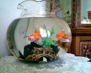 Wts aquarium/akuarium bulat Besar dan Kecil