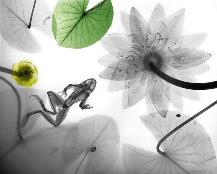 ~๑๑.Indah Berwarna Lukisan X-Ray Flora dan Fauna.๑๑~