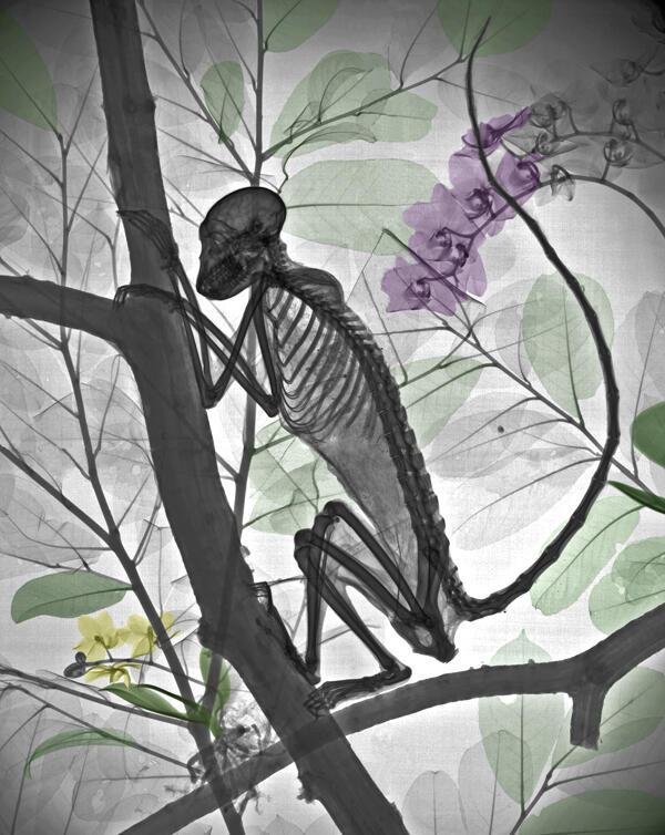 Fisikawan Radiasi Menciptakan Lukisan X-Ray Flora dan Fauna Berwarna yang Menakjubkan