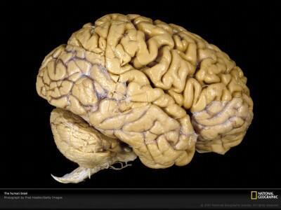 10 Cara Melatih Otak Agar Lebih Kreatif