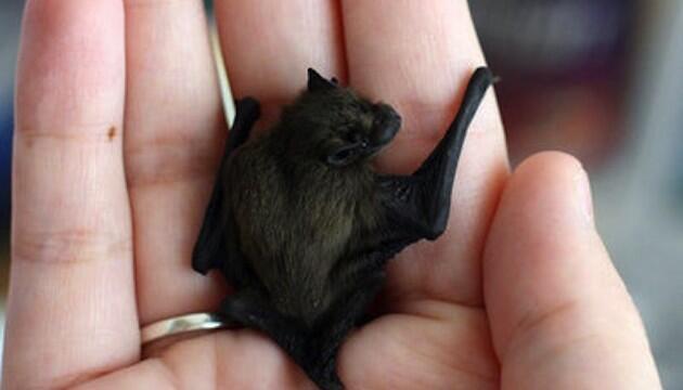 10 Hewan Terkecil di Dunia, Imut dan Menggemaskan!