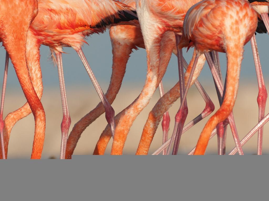 Unduh 8800 Wallpaper Flamingo Lucu HD Paling Keren