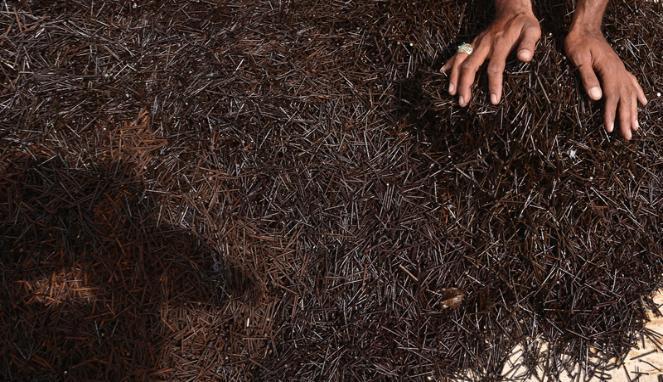 Semut Orange Kumpulkan 6,5 Kuintal Ranjau Paku
