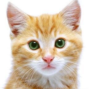 Perbandingan Pengelihatan Manusia dengan Kucing