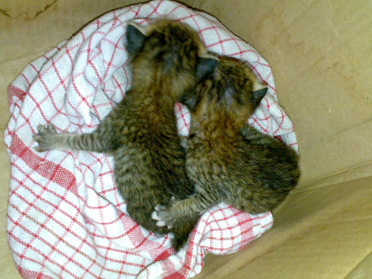 [HELP] dua beranak yang ditelantarkan(kucing)