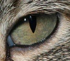 Keajaiban Mata Kucing