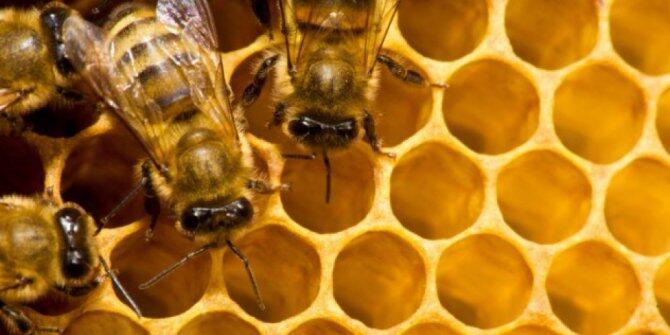 10 Tabiat Manusia yang Mirip Serangga