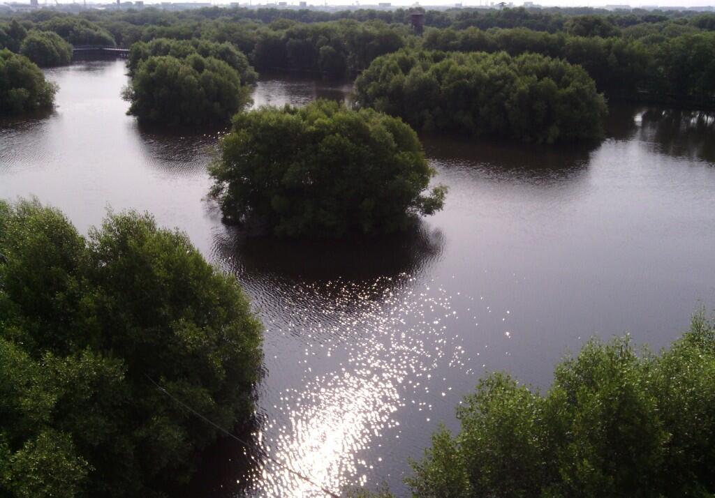 Ternyata Ada Hutan Mangrove Cantik di Jakarta