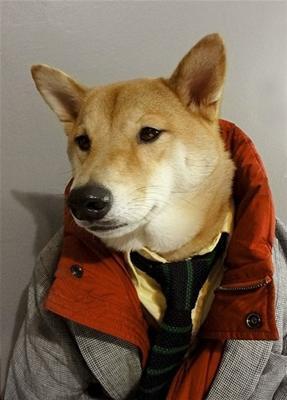 [Woow] Model Anjing ini Menjadi Icon Fashion Pria Gan [+Pic]