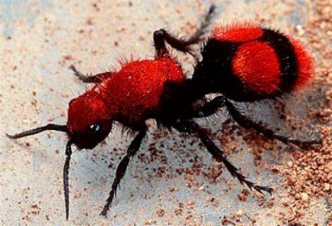 Semut Yang Bukan Semut