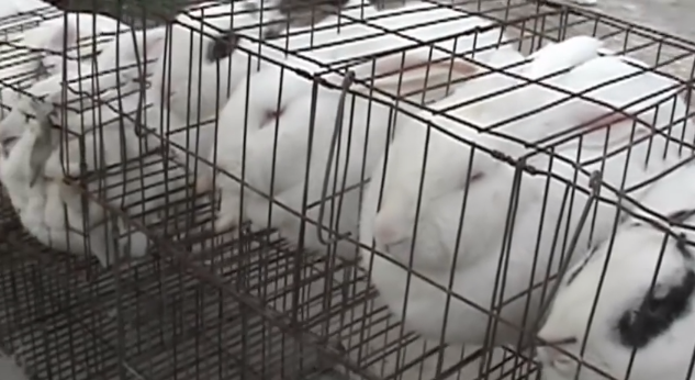 Bangsa Korea, Taiwan, dan China yang gemar memakan binatang dari siksaan (REAL!!!)
