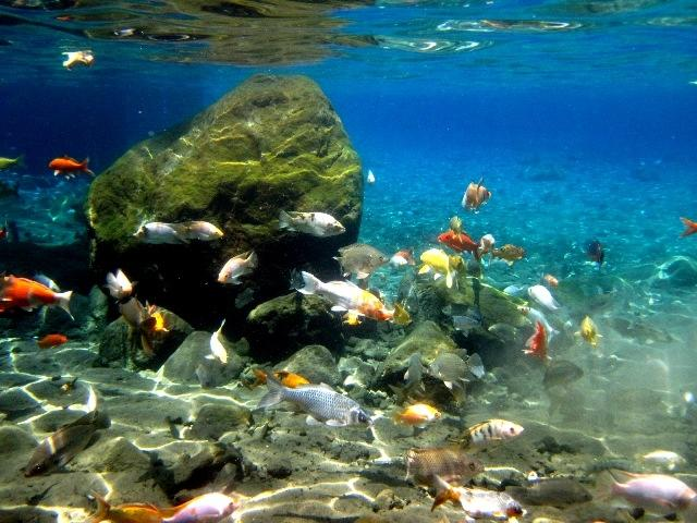 Gak Perlu ke Bunaken, Snorkeling Umbul Ponggok Klaten Menggoda