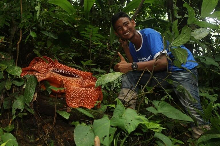 Yamg Belum Liat Rafflesia Arnoldi Masuk Yookkkk!!!!!!!