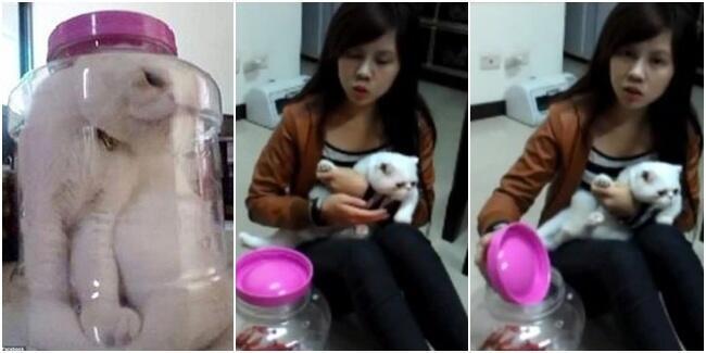 Ya Ampun,mahasiswi ini tega siksa kucingnya yang lucu!