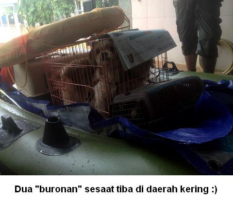 [MENGHARUKAN] Menyelamatkan Hewan Dari Bencana Banjir Jakarta