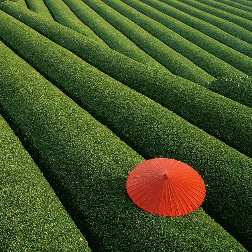Unduh 8800 Wallpaper Pemandangan Hijau Segar Foto Paling Keren