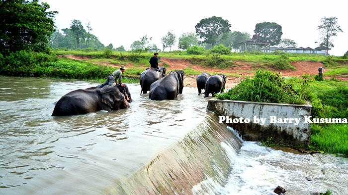 Way Kambas Taman Nasional Tertua di Indonesia.
