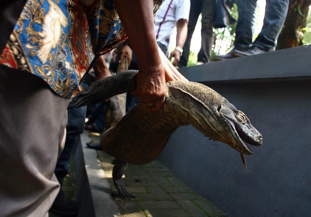 Selamatkan Kebun Binatang Surabaya