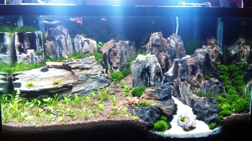 Terjual toko aquascape | KASKUS