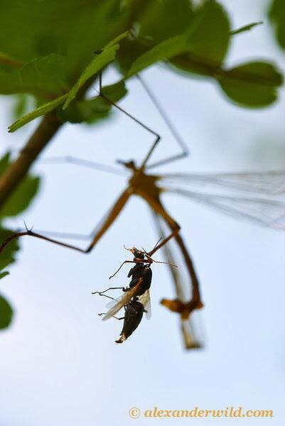 12 Cara Mati yang Mengerikan Jika Anda Seekor Arthropoda