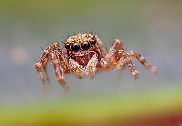 Makro Fotografi Serangga