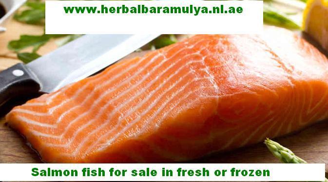 """Dijual ikan salmon Atlantik """"fresh"""" dan frozen dengan kwalitas prima & harga oke"""