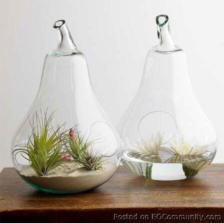 Unik dan Menarik Terrarium dalam Kaca