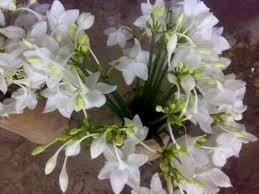 Bunga yang Hanya Mekar Di Malam Hari