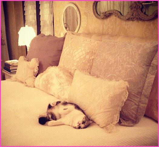 [PIC] Ini Dia Si Meredith, Kucing Lucu Milik Taylor Swift