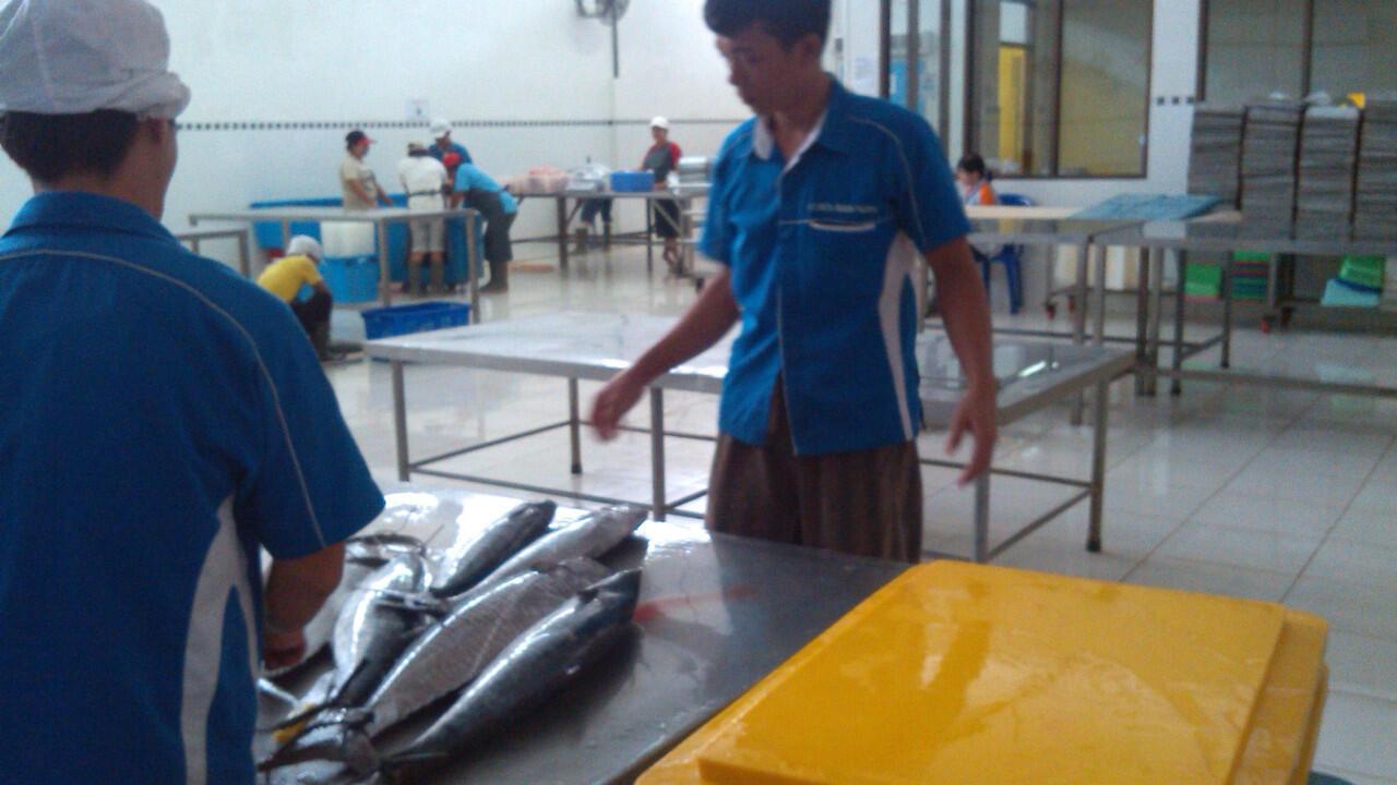 jual daging fillet ikan laut partai besar