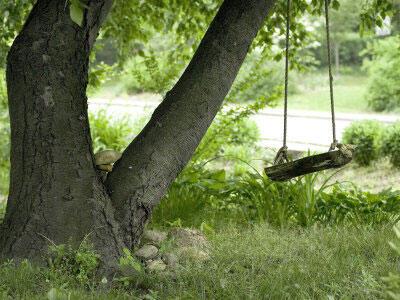 Pohon-Pohon Yang Mendatangkan Kebersamaan