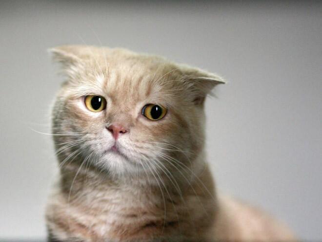 Download 100+  Gambar Kucing Imut Lagi Sedih Paling Bagus