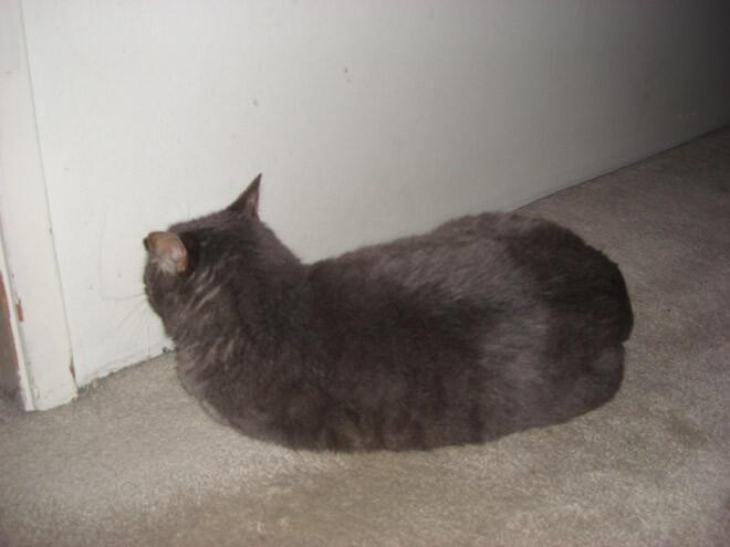 Kumpulan Foto - Foto Kucing Kalo Lagi Stress, Sedih , dan Depresi gan ,Sini Masuk Gan