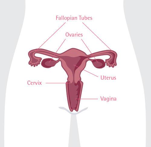 """Mengenal Lebih Dekat Penyakit """"Kanker Ovarium"""""""