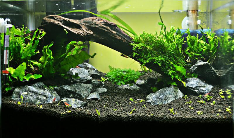 Aquascape Pemula Kaskus