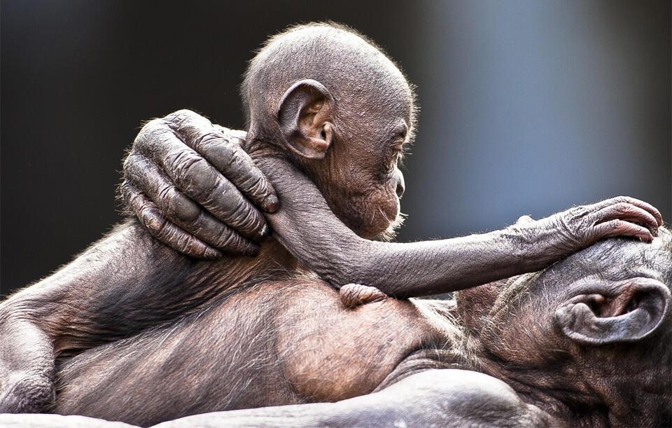 12 Foto Tentang Kasih Sayang Induk Hewan kepada Anak-anaknya