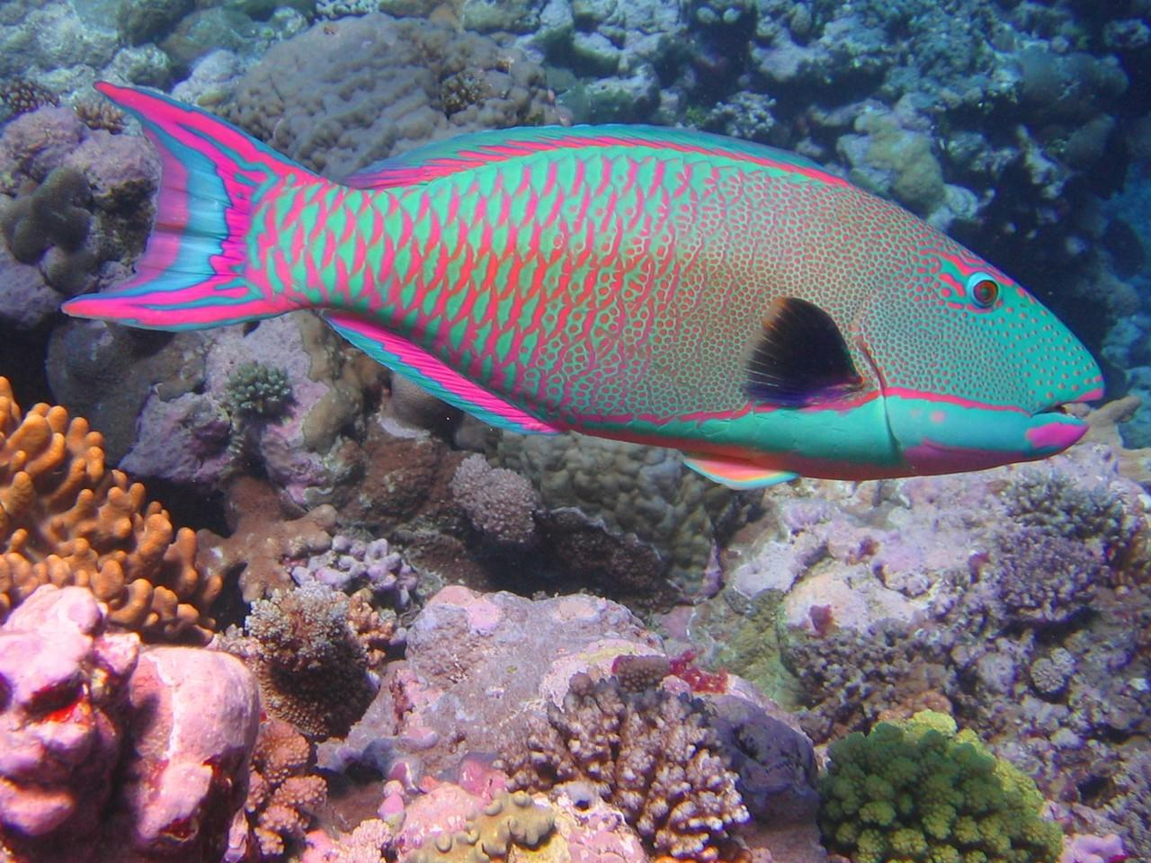 Unduh 8800 Gambar Ikan Ikan Laut Terbaru