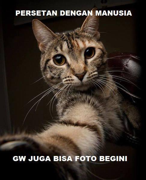 kumpulan meme kucing kocak gan(masuk gan)