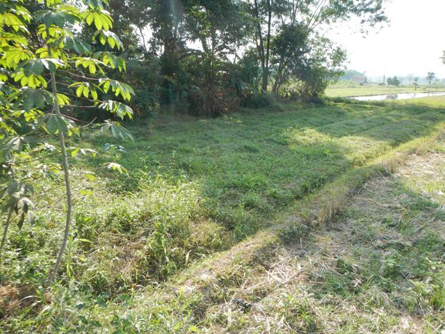 Tanah Sawah 302 M2 Pinggir Jalan Di Sidoarum, Godean