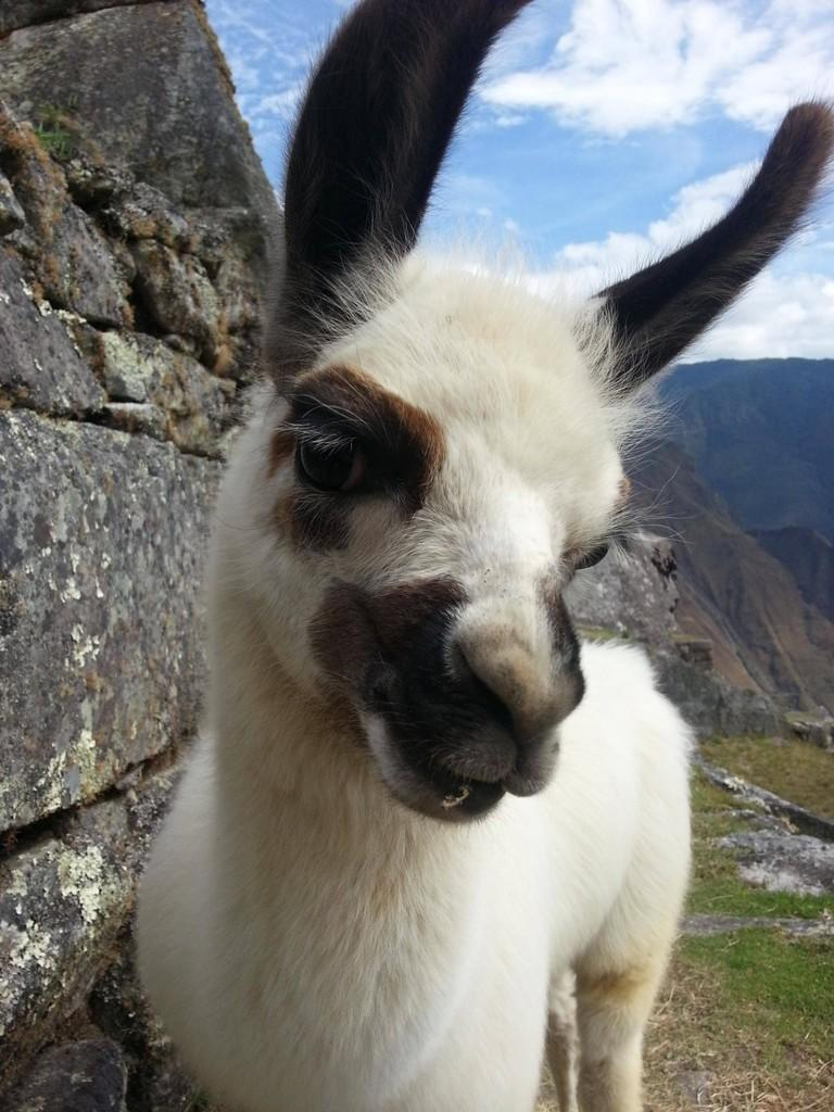 Hewan-hewan Inipun Foto Selfie Layaknya Manusia