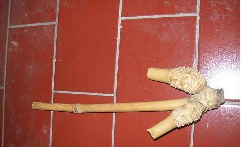 Bambu Patel Lele dan Bambu Gandeng(Double)