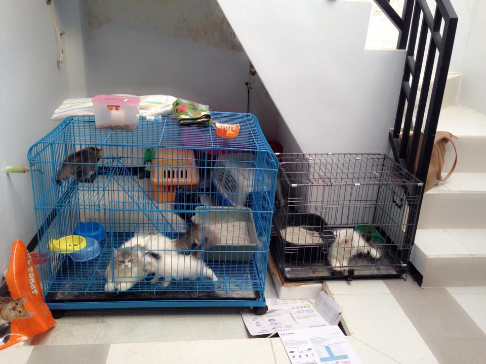 Terjual Kucing 4 Ekor 1 Kandang Besar 1 Kandang Kecil